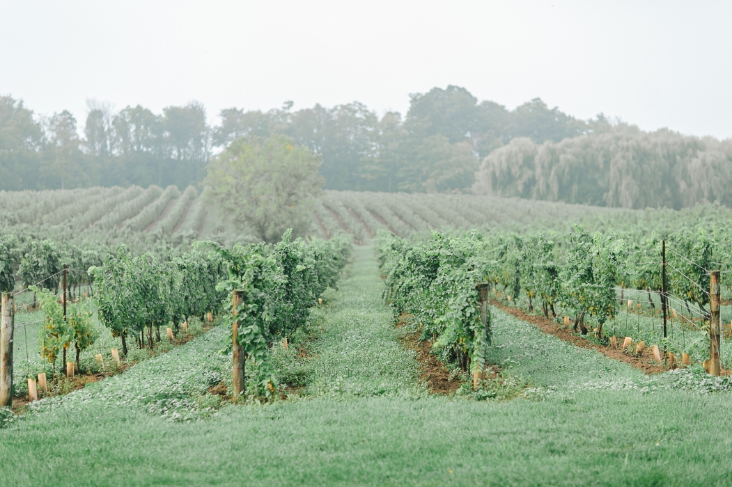 Tamara Lockwood Photography, Vineland Estates Winery}