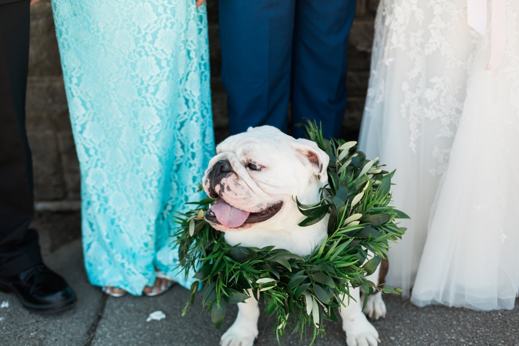 Oscar the English Bulldog}