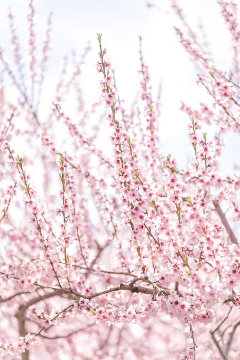 Blossom close up}