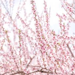 Blossom close up