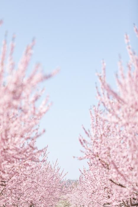 Pink & Blue}