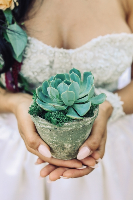 Potted succulent in a vintage clay pot}